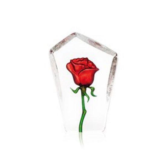 Floral Fantasy Rose