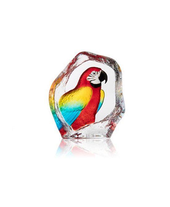 Wildlife Parrot